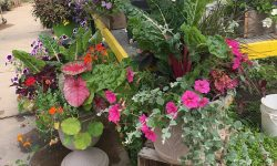 Landscaping Gallery-1